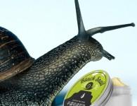Black snail – отзыв косметолога о тайском улиточном креме для омоложения