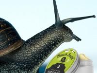 Black snail – отзывы о креме с улиткой