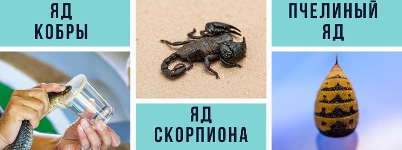 яд кобры яд скорпиона пчелиный яд