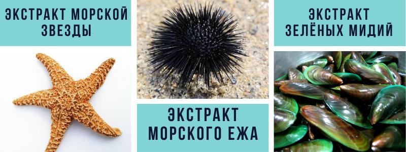 экстракт морской звезды, экстракт морского ежа, экстракт зелёных мидий