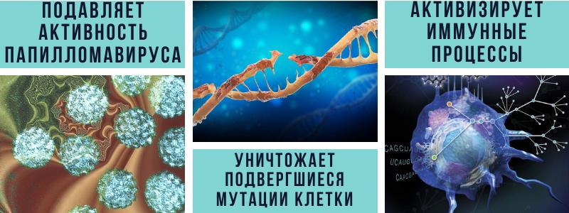 подавляет активность папилломавируса уничтожает мутировавшие клетки